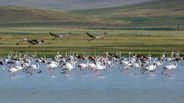 Van'ın Özalp ilçesinde dönemsel olarak kuraklık yaşanan Akgöl, son zamanlardaki yağışların ardından 45 civarında su kuşu türüne ev sahipliği yapıyor.  Kış aylarını Kuzey Afrika'da geçirdikten sonra beslenme ve dinlenme amacıyla Van Gölü havzasına gelen, aralarında flamingoların da bulunduğu 45 civarında su kuşu türü, daha önce kuraklık yaşanan ancak son zamanlardaki yağışlar dolayısıyla yeniden hayat bulan Akgöl'e ulaştı.