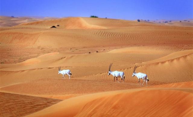 Çölün ortasına kurulan Dubai, içinde çölden fazlasını saklıyor