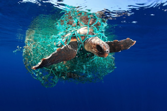 2019, Deniz koruma kategorisi birincisi, İspanya