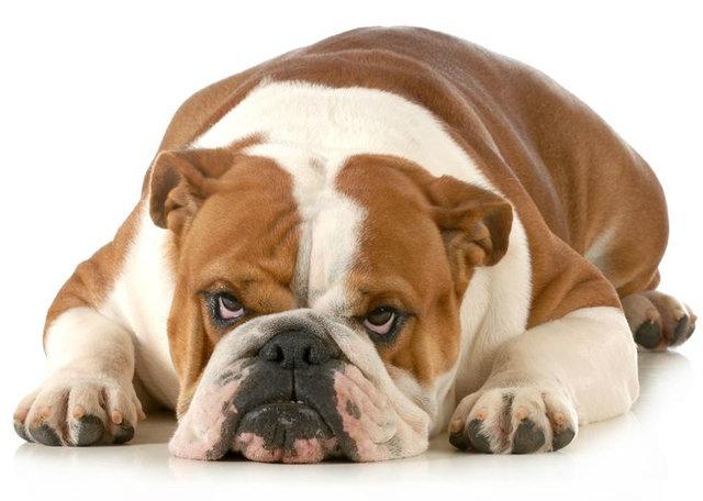 Google üzerinde en çok aranan hayvan kategorisinde 1999 ve 2018 yılları arasında Köpek birinci sırada yer aldı.