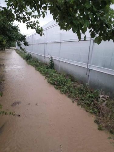 19 Mayıs Salı akşamı  Prizren'e bağlı çok sayıda köy ve Mamuşa Belediyesi tarım arazileri ve seralara dolu yağışı zarar verirken Çarşamba akşamı yoğun yağmur yağışı da tarım ürünlerine büyük zararlar verdi.