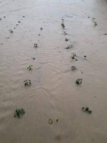 Mamuşa Belediyesi ve Prizren'e bağlı çok sayıda köy tarım arazileri iki akşam dolu ve yoğun yağmur yağışından büyük zarar gördü.