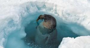 Antartika'dan muhteşem görüntüler