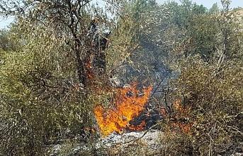 Gayrimeşru Yahudi yerleşimciler bu sefer de ağaçlara saldırdı