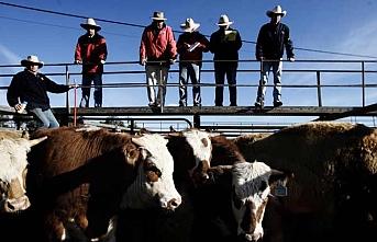 Avrupa ve ABD arasında sığır eti için müzakereler başlıyor