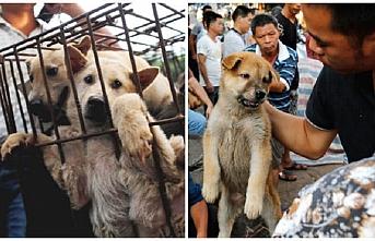 Güney Kore'nin en büyük köpek mezbahası kapatıldı