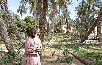 Türkiye'den Afrika'ya tarım yardımı