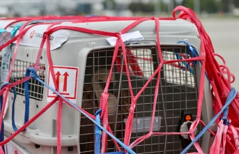 Kızıl akbaba 'Dobrila' Sırbistan'a döndü