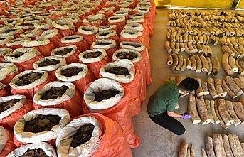 8,8 ton fil dişi 132 bavula sığdı