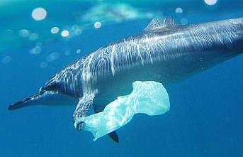 Dünyadaki plastik poşeti yasaklayan ülkelere biri daha eklendi