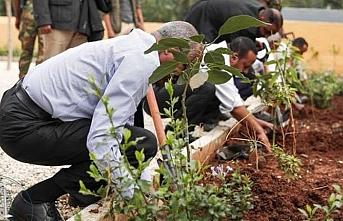 Etiyopya'da bugün tüm eller fidan dikecek
