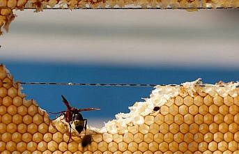 Kerkük'te milyonlarca arı telef oldu