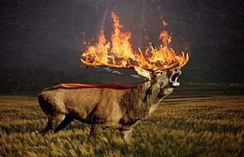 Sibirya'da yanan sadece orman değil