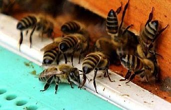 Arılar saldırdı..19 kişi hastaneye kaldırıldı