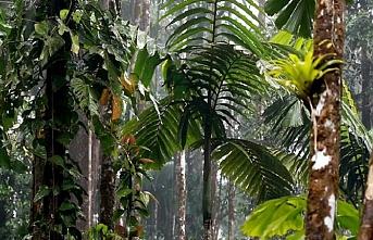 Güney Amerikalılar orman koruma anlaşması imzaladı