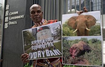 Organize kötülük... 117 fil, dişi için öldürüldü