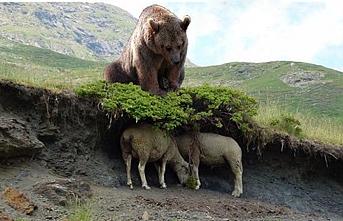 Kırcaali bölgesinde ayılar hayvanlara saldırdı