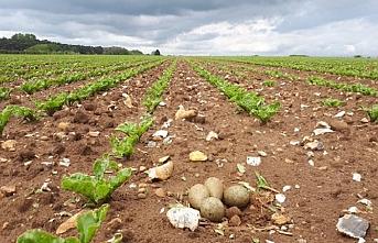 Şeker pancarı ve mısır üretimini geliştirecek planlama yapılacak