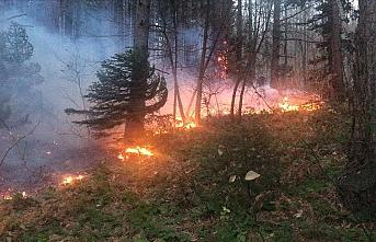 Uludağ'da orman yangını