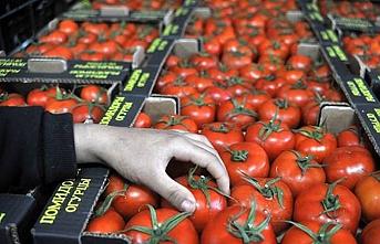 Domates üreticilerine güzel haber.. Rusya kapıları açıyor