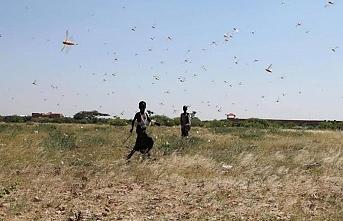 Kenya çekirge istilası nedeniyle açlık kriziyle karşı karşıya