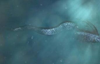 Kral Ringa balığı ortaya çıktı.. Japonlar deprem ve tsunami beklemeye başladı