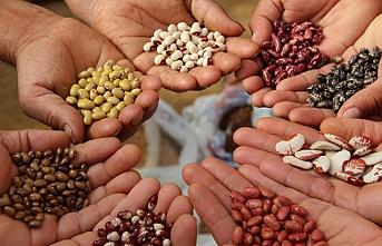 Türkiye tohum ticaretinde dünyada ilk 10 ülke arasında