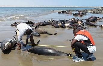 86 yunus sahile vurdu..Namibya soruşturma başlattı