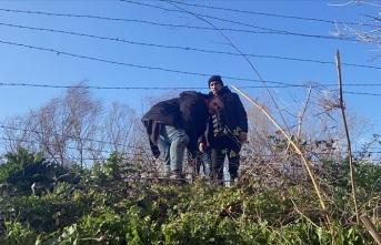 Göçmenler tel çitleri keserek Yunanistan'a geçti