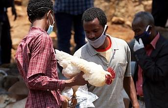 Dünya Sağlık Örgütünden Etiyopya için sarı humma salgını uyarısı