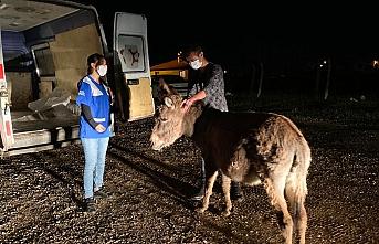 Ankara'da yavrusuna köpeklerin saldırtıldığı eşek Bursa yolcusu