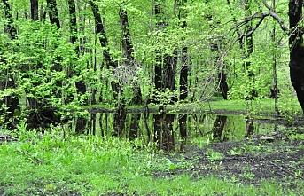 Kesin korunacak hassas alan ilan edilen Sığla Ormanları şifa kaynağı