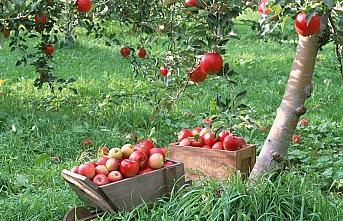 Taylandlılar Türk elmasının tadına bakacak