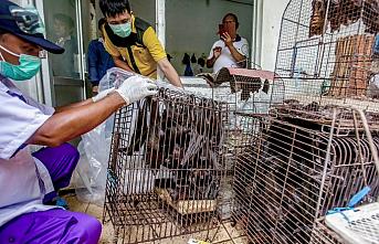 Virüsle damgalanan Wuhan'da vahşi hayvan yemek yasaklandı