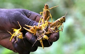 Yeni çekirge sürüleri Doğu Afrika'daki açlık tehlikesini büyütüyor