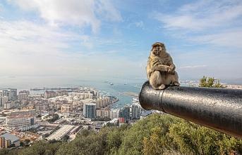 Cebelitarık'ta maymunlara dokunmak yasaklandı