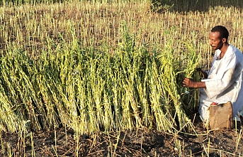 TİKA'dan Sudanlı çiftçilere tohum ve zirai alet desteği