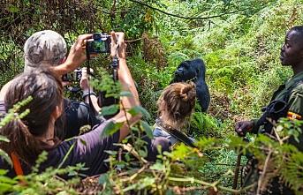 Uganda'da ünlü dağ gorili öldürüldü