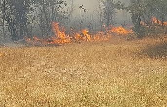 Çanakkale Yenice'de orman yangını çıktı