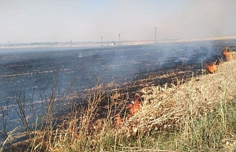 Şanlıurfa'da 40 dönüm buğday ekili alan yandı