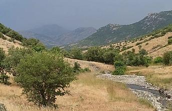 Siirt'te PKK'ya yönelik operasyonda havan mermisi bulundu