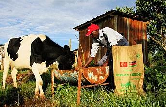 TİKA binlerce Kenyalı çiftçinin hayatını değiştirdi