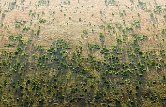Afrika Büyük Yeşil Duvarı: Bu dünyanın bir sonraki harikası mı?