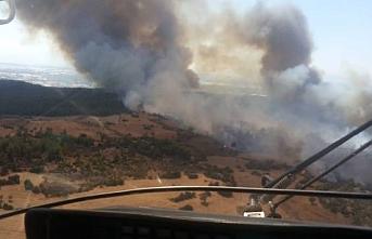 Antalya Serik'te orman yangını