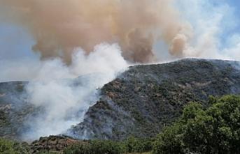 Elazığ'da çıkan yangında 1000 dekar ormanlık alan zarar gördü