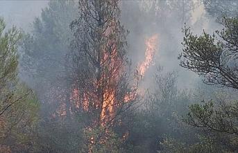 Mardin'in Ömerli ilçesinde yangın