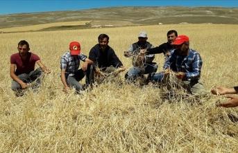 Sivas'ta etkili olan dolu 10 bin dekar tarım arazisine zarar verdi