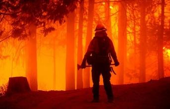 California'daki orman yangınlarında bu yıl rekor düzeyde alan yandı