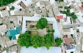 Dağıstan camisindeki ağaç yarışmada Rusya'yı temsil edecek