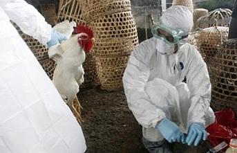Rusya veya Kazakistan'dan göçen kuşlar grip taşıdı